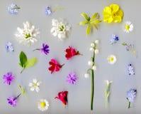 blooming spring flowers Royalty Free Stock Image