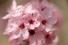 Blooming spring flowers. In the sun Royalty Free Stock Image