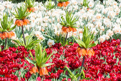 Blooming spring garden Royalty Free Stock Images
