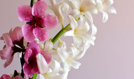 Blooming spring hyacinths with peach blossoms Stock Photos