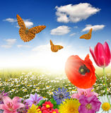Blooming spring landscape Royalty Free Stock Photography