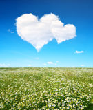 Blooming spring meadow and blue sky with a white clouds in the form of heart. Royalty Free Stock Image