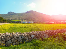 Blooming spring meadow on the island. Favignana Stock Images