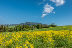 Blooming spring meadow Royalty Free Stock Photos