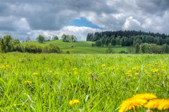 Blooming spring meadow under the sky with clouds Stock Image