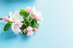 Free Blooming Spring Sakura On A Blue Background With Space For A Greeting Message. The Concept Of Spring And Mother`s Day. Beautiful Stock Image - 145314521