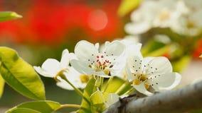 Blooming spring tree Stock Image