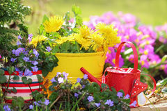Blooming still life Royalty Free Stock Images
