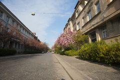 Blooming street in spring with blue clear sky. royalty free stock photography