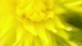 Blooming summer flower macro Royalty Free Stock Photos