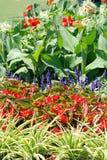 Blooming summer garden Stock Photography