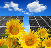 Blooming sunflowers in the background solar panels Royalty Free Stock Photography