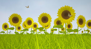 Blooming Sunflowers. Landscape with Field of  Sunflowers and Blue Sky. The Three-dimensional Scene Stock Image