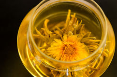 Blooming tea Royalty Free Stock Photography