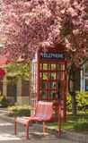 Blooming telephone booth Stock Photography