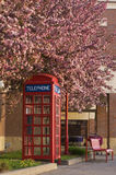 Blooming telephone booth Stock Images