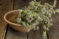 Blooming thyme in a ceramic plate Stock Image