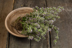 Blooming thyme in a ceramic plate Royalty Free Stock Image