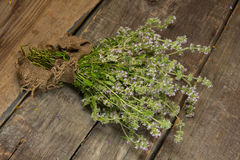 Blooming thyme Stock Image
