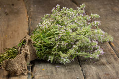 Blooming thyme Royalty Free Stock Images