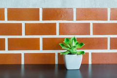 Blooming Tiny Green Cactus Plant in White pot. On Wooden Shelf with Brick Wall Background Vintage Style.  Copyspace for Text insert Stock Image