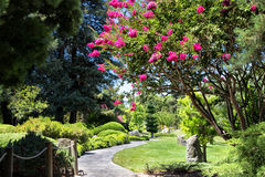 Blooming Tree Along Curved Path Royalty Free Stock Photos