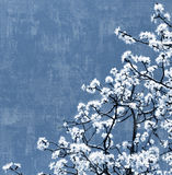 Blooming tree background Royalty Free Stock Images