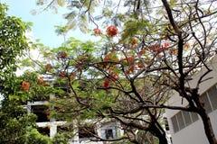 Blooming tree. Royalty Free Stock Photos
