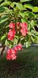 Blooming tree. stock image