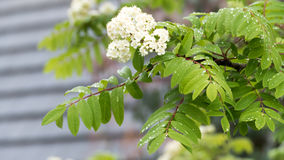 Blooming tree branch royalty free stock photo