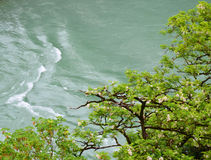 Blooming tree branches over river. Stock Images