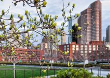 Blooming tree at Financial District in North End Park Boston. Blooming tree and Financial District in North End Park on Cross Street in Boston, Massachusetts royalty free stock image