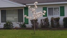 Blooming tree Royalty Free Stock Image