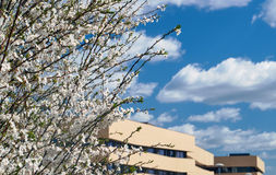 Blooming tree and a fragment of modern architecture Stock Photos