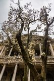 Blooming tree in the garden in front of the Dolmabahce Palace in Istanbul, Turkey stock images