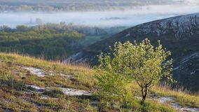 Blooming tree on hills. Spring landscape with morning fog, sunny day stock footage