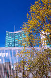 Blooming tree and modern buildings Royalty Free Stock Photography