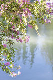 Blooming tree in the nature during spring by the lake. Nature background Royalty Free Stock Photos