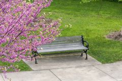 Blooming Tree next to Park Bench royalty free stock images
