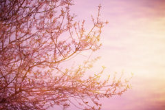 Blooming tree over sunset Stock Photo
