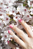 Blooming tree with pink flowers in spring. Springtime. Sunny day stock image