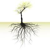 Blooming tree and root Royalty Free Stock Photos