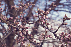 Blooming trees on field in spring. Detail Stock Photos