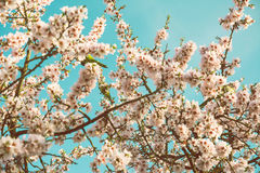 Blooming trees on field in spring in the forest Stock Image