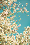 Blooming trees on field in spring in the forest Stock Photography