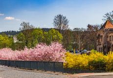 Blooming trees Stock Image