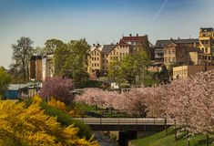 Spring in the city Royalty Free Stock Photography