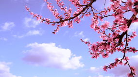 Blooming trees stock footage
