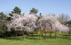 Blooming trees - RAW format Stock Image