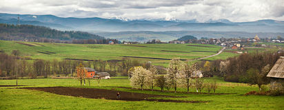 Blooming trees in spring mountains. Snow and green fields Stock Photo